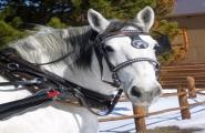 Sombrero Stables Winter Park